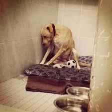 animal shelters sad. Brilliant Sad Shelter Dog Lana Was Too Sad To Go On Walks In Animal Shelters Sad S