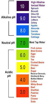 Alkaline Ph Level Chart Acid Or Alkaline The Real Deal On Your Bodys Ph Levels