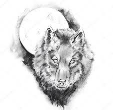 Skica O Tetování Wolf Stock Fotografie Outsiderzone 8684182