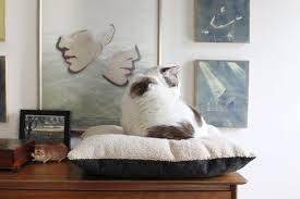 how to purrfectly simple diy cat bed