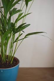 I wanted to find the best air-purifying houseplants that were also  incredibly low maintenance, attractive and child friendly (not poisonous or  with sharp ...