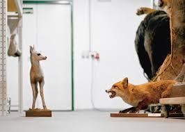 klaus pichler goes behind the scenes of vienna s natural history 5 of 14 vienna natural history museum by klaus pichler