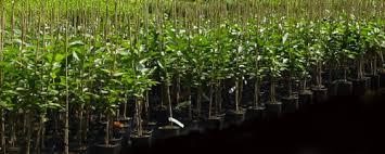 boomkwekerij fruitbomen