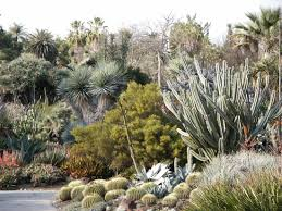 huntington library desert botanical garden in afternoon after and during rain various cactus and succulent plants by pamla j eisenberg from anaheim usa