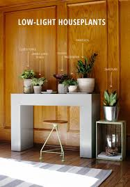 six easy to maintain houseplants that do well in low light rooms