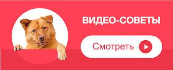 <b>Ошейник</b> для кошек от блох и клещей: как выбрать <b>ошейник</b> для ...