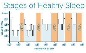 Ideal Sleep Cycle Chart Sleep Cycle Stages Chart Www Bedowntowndaytona Com