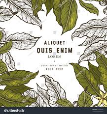 coffee plant illustration vector. Interesting Coffee Coffee Tree Illustration Engraved Style Vintage Coffee Frame  Or Label With Typography Example Vector Illustration And Plant Illustration