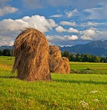 dry grass field background. Work Landscape Tree Forest Grass Plant Sky White Hay Field Farm Meadow Prairie Hill Flower Panorama Dry Background