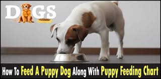 Puppy Feeding Chart How To Feed A Puppy Dog Along With Puppy Feeding Chart Dogsfud