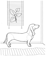 Dachshund Coloring Book For Adult Antistress Pages Throughout