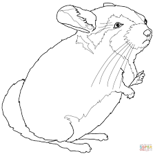 Small Picture Chinchilla coloring page Free Printable Coloring Pages