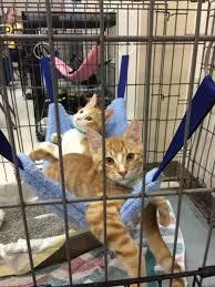 cat hammock kitty close up