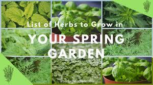 list of herbs to grow in your spring garden 1 jpg