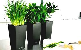 office flower pots. Full Size Of Artificial Indoor Plants For Awesome Flowers Plant Pots Within Greatest Office Flower T