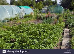 Kitchen Gardens Plastic Greenhouses And Vegetables Growing In Kitchen Gardens