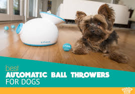 the best automatic ball throwers for dogs user reviews ing guide