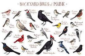 Backyard Birds Of Maine Field Guide Art Print