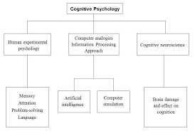 cognitive approach simply psychology cognitive psychology sub topics