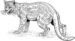 Jaguar Coloring Pages Black Jaguar Coloring Page Black Jaguar