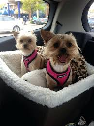 mesmerizing dog car booster seat which is the best dog car seat dog car booster seat