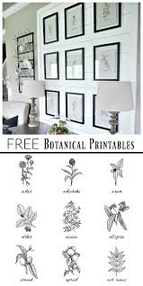 Free Black And White Botanical Art Free black