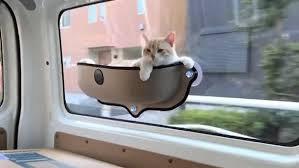 Cat Causes Car Accident