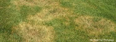 Lawn Diseases Milorganite
