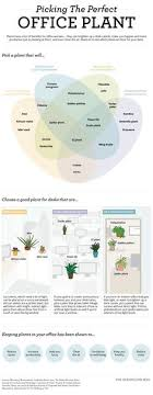 feng shui your office. pick the right office plant for your environment with this diagram feng shui