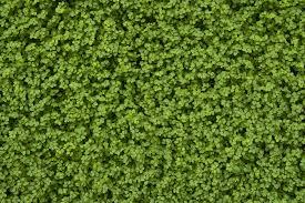 green carpet by szorny stock on DeviantArt