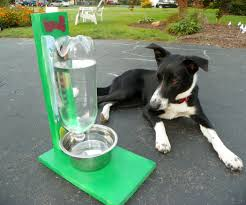 outdoor dog water dish designs