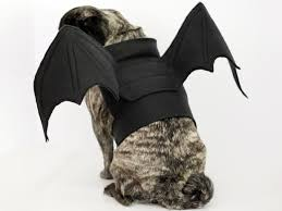How to Make <b>Bat</b> Wings <b>Halloween Costume</b> for a <b>Dog</b> | <b>Dog</b> ...