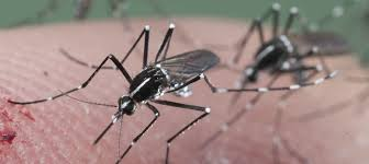 15 Best Home Remedies To Get Rid Of Mosquitoes