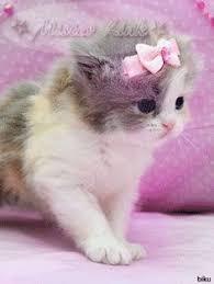 lovely cat pic cute cat kitten cat doll sweet cat unicorn cat unicorn cat t shirt t shirt design blue eye cat cat baby romantic cat couple cat