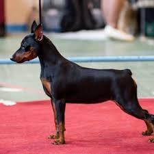 TopDog - Международные выставки <b>собак</b>