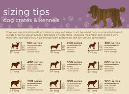 Dog Crate Size Chart Pin By Ashley Lovelace On To Build Dog Crate Sizes