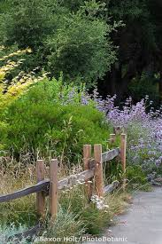 Small Picture 26 best California Native School Garden images on Pinterest