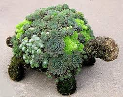 moss filled garden topiaries planted with hardy succulents make great gifts for the gardener on your list