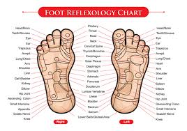 Foot Reflexology Chart Vector Download Free Vectors