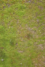 dirt grass texture seamless. Grass And Ground Background Dirt Texture Seamless