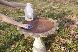 cleaning bird bath