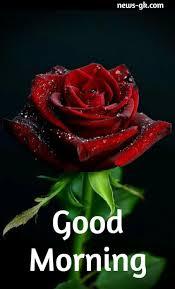 good morning rose images free