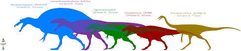carcharodontosaurus size carcharodontosaurus saharicus vs giganotosaurus carolinii the