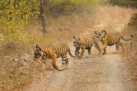 essay on wildlife conservation in cause and effect on essay on wildlife conservation in