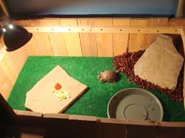 indoor box turtle habitat