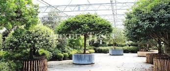 Sichtschutz Durch Pflanzen M Bel Ideen Und Home Design Inspiration Hoher Sichtschutz Durch Pflanzen
