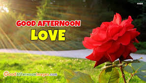 Good Afternoon Love Quotes Magnificent Good Afternoon Love With Rose GoodAfternoonImagesCom