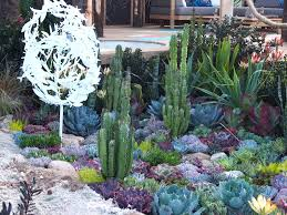 Small Picture Succulent Garden Designs Excellent Succulent Bed Variegated Agave