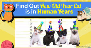 How Old Is Old For Your Cat