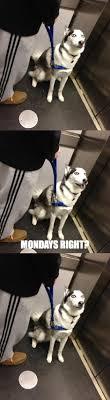 awkward conversation dog in my friend s elevator ur awkward conversation dog in my friend s elevator